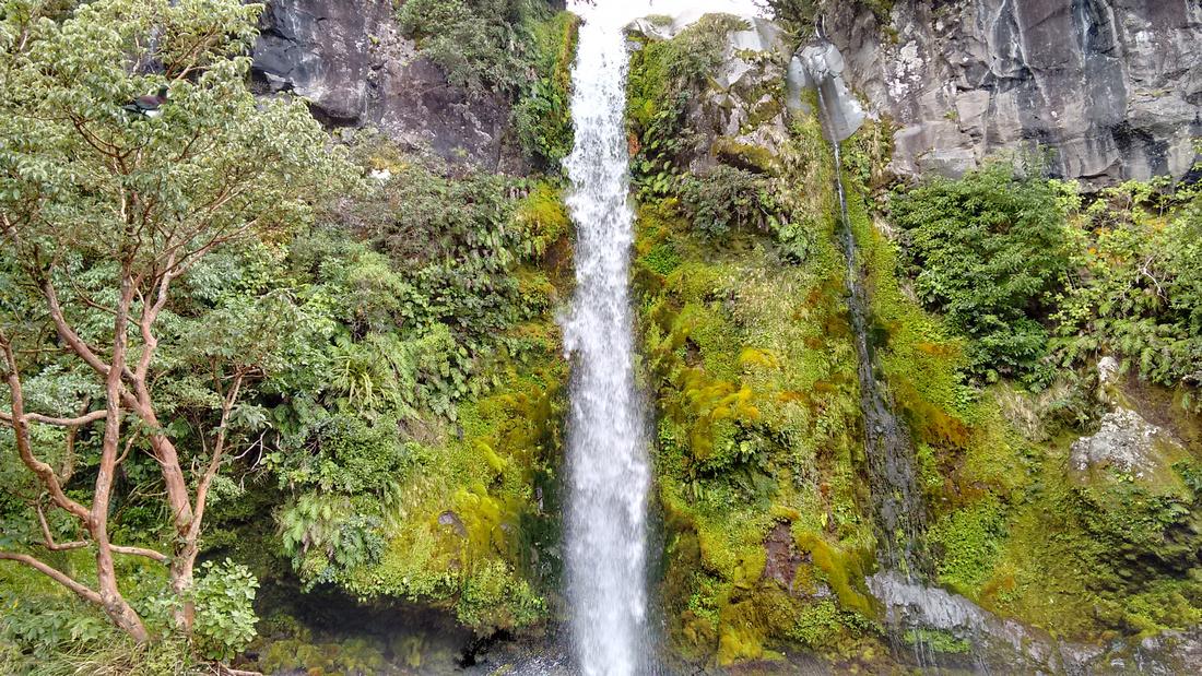 nat-NZ-taranaki-mt_taranaki-dawson_falls&nz_pidgeon