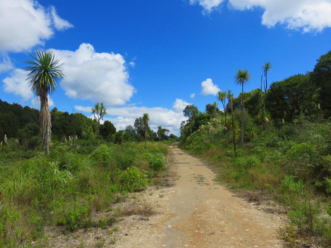 tra-NZ-taumarunui-timber_trail-road
