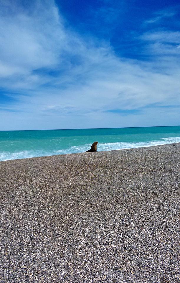 ani-NZ-marlborough-the_needles-seal