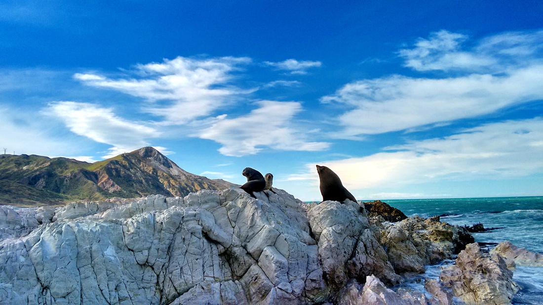 ani-NZ-marlborough-the_needles-seal_colony-10
