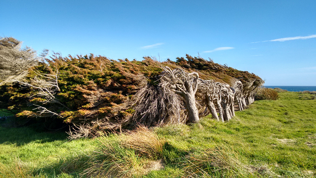 nat-NZ-southland-waipapa_pt_trees