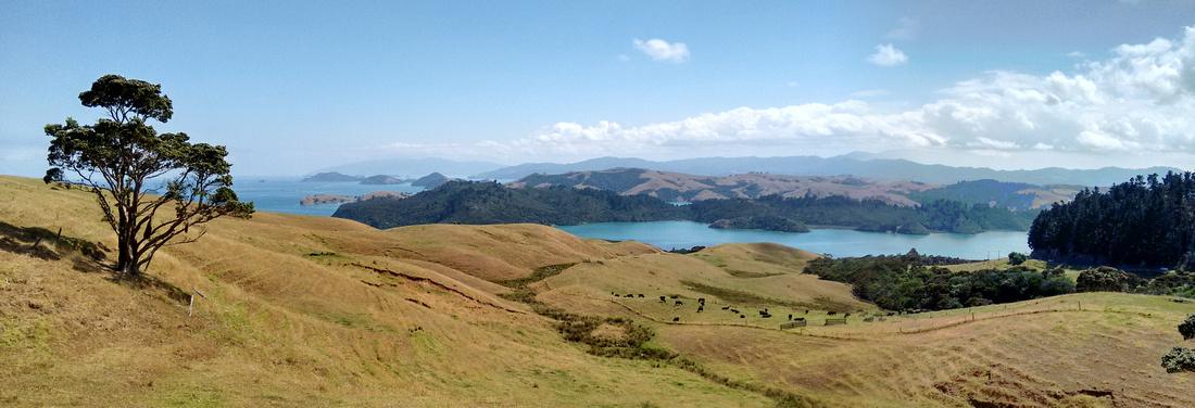 pan-NZ-coromandel-manaia_harbour